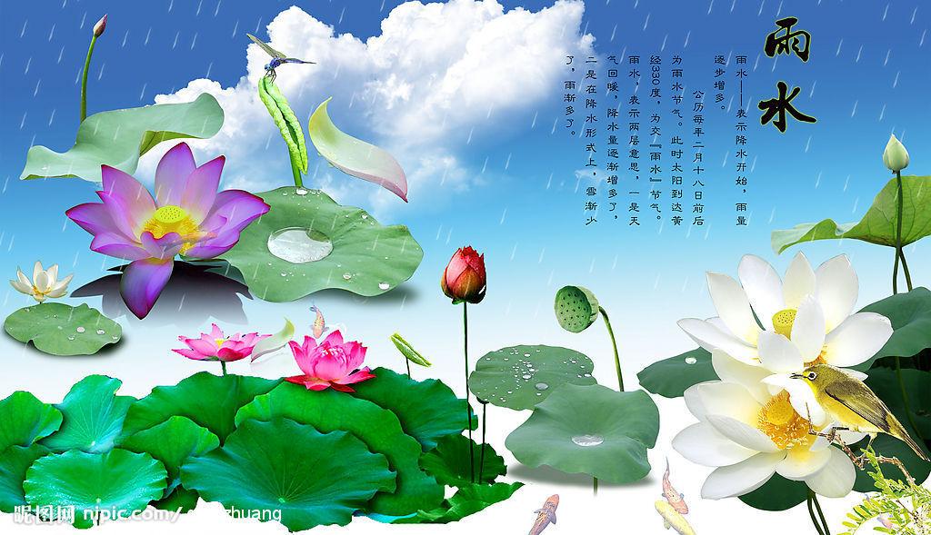 Hoa Sen Wallpaper Hoa Sen